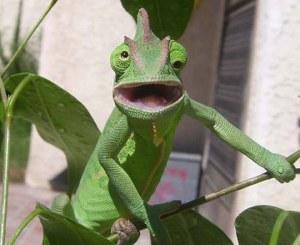 Funny Chameleon_2